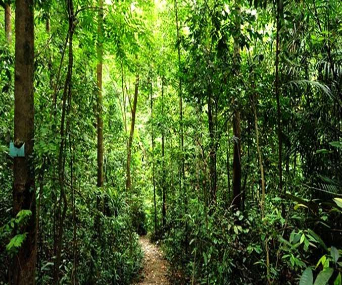 mont-botanik-residence-bukit-timah-nature-reserve